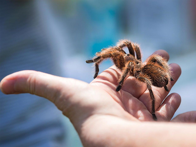 ragno sulla mano di un bambino