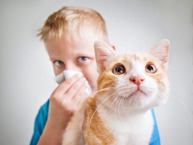 bambino allergico al gatto si soffia il naso
