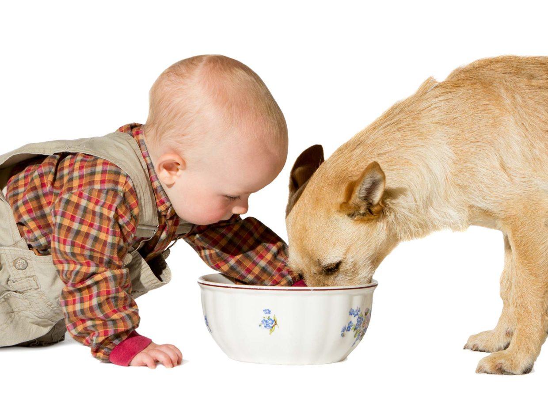 neonato infila la mano nella ciotola mentre il cane sta mangiando