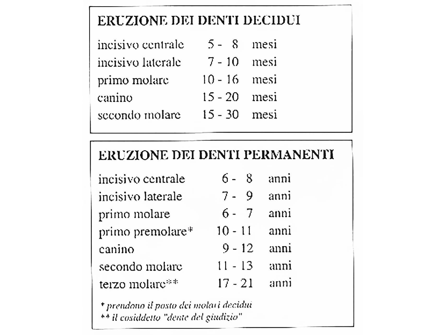 tabella sull'eruzione dei denti decidui e permanenti