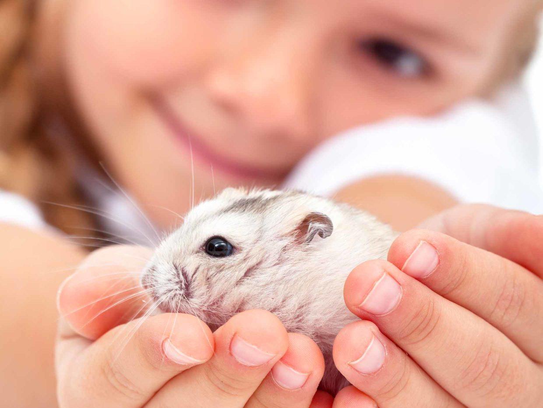 bambina tiene criceto in mano