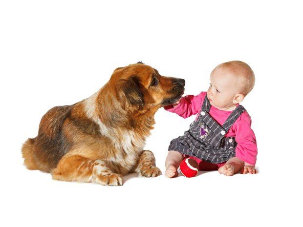 bambina piccola accarezza cane di grossa taglia