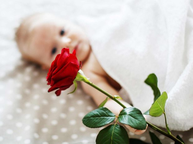rosa rossa in primo piano viene afferrata da neonato disteso
