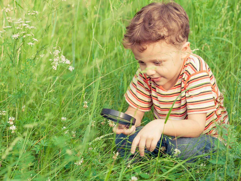 bambino guarda con la lente di ingrandimento le margherite su un prato